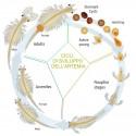 Artemia salina - Start coltura